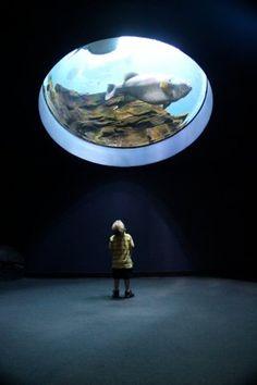 Georgia Aquarium Fish