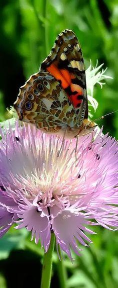 Butterfly on flower. - Cute animals world