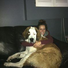 Worlds biggest lap dog!