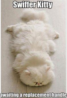 Swiffer kitty, very handy :-))