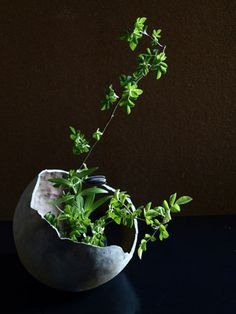 Ikebana Asian style flower arrangement 残月