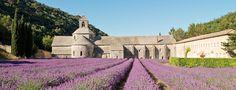 Abbaye de Sénanque - cistercian abbey - 84220 Gordes, route de Sénanque - guided visits, reservation recommended - mass