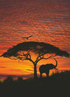 Fototapet Natura Apus de Soare Africa pentru decorare pereti cu aplicare usoara si culori rezistente in timp. Fototapet pentru camere optimiste si energice.