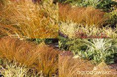 Ogród z lustrem - strona 204 - Forum ogrodnicze - Ogrodowisko