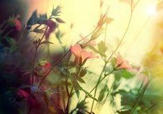Let it Shine by Lady-Tori