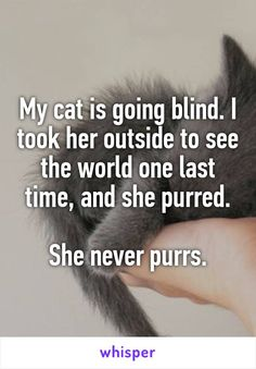 My cat is going blind. I took her outside to see the world one last time, and she purred.  She never purrs.