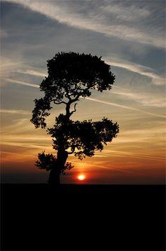 Tree photography tips