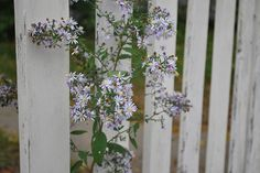 Wildflowers + picket fence - #Somerville