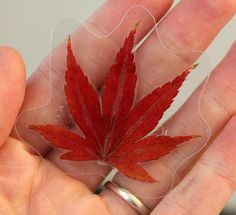 Laminated leaf magnets - must make! Little pressed flowers would be gorgeous to - as magnets and for the light table