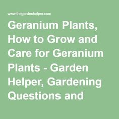 Geranium Plants, How to Grow and Care for Geranium Plants - Garden Helper, Gardening Questions and Answers