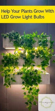 Help Your Plants Grow With LED Grow Light Bulbs - Fund. Indoor Plant Lights, Grow Lights For Plants, Growing Plants Indoors, Plant Lighting, Herbs Indoors, Indoor Plant Wall, Indoor Plants Low Light, Led Grow Light Bulbs, Light Bulb Plant
