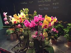 New orchids arriving weekly!