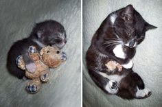 20 of the cutest cats and dogs who just can't be parted from their childhood toys