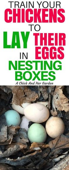 Chicken Coop - Finding eggs all over your yard in hidden nests is fun for about a day. These two steps will train your chickens to lay in nesting boxes! Building a chicken coop does not have to be tricky nor does it have to set you back a ton of scratch. Raising Backyard Chickens, Backyard Poultry, Keeping Chickens, Laying Boxes For Chickens, Nesting Boxes For Chickens, Laying Hens, Pet Chickens, Heritage Chicken Breeds, Building A Chicken Coop