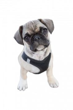 Retromops Profilbild Flat Coated Retriever, Continental Bulldog, Cavalier King Charles Spaniel, Labrador Retriever, Terrier, Labradoodle, French Bulldog, Animals, Portuguese Water Dog