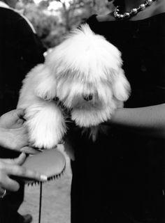 DOG'S número 7 ©gloriagiménez