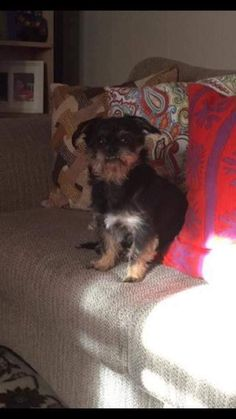 Danbury Animal Control added 2 new photos. 5 hrs *****STILL MISSING***** Missing from the area of South Street and Stone Street since Sunday 2/19, male yorkie mix named Chico. Please call 203-748-6456