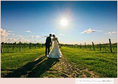 Stunning Casa Larga Vineyard Wedding Vineyard Wedding, Wedding Images, Got Married, Real Weddings, Bride, Beautiful, Wedding Bride, The Bride, Brides