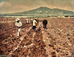 Se prosiguió una política de reparto de tierras y concesión de créditos.