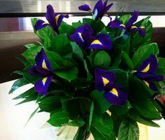 bouquet of iris