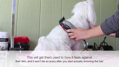 How to train your dog for grooming time