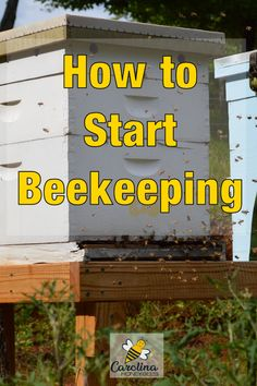 How to start beekeeping and have your own beehive.  Beekeeping is a great hobby but it has a bit of a learning curve.  Key considerations to think about before getting bees. #carolinahoneybees #newbeekeeper #startingabeehive