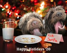 """Your pet just """"sleighed"""" 2020! They deserve their own Santa Selfie with pizzazz! 🐱🎁🐶 🎄 Unlimited downloads of over 20 beautiful holiday scenes 🎁 BONUS: get $25 to shop Shutterfly for photo cards, stocking stuffers, and more Funny Animal Photos, Funny Animals, Cute Animals, Dog Pictures, Beautiful Christmas Cards, Funny Xmas, Wood Carving Patterns, Funny Tattoos, You Funny"""