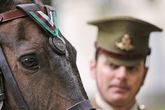 LONDON (AP) — A U.S. Marine Corps horse who served under fire during the Korean War has been posthumously decorated for…