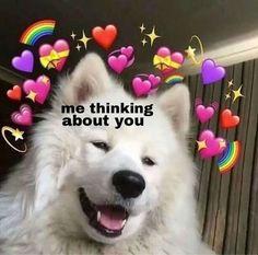 46 images about ✧*・✧heart emoji memes✧*・✧ on we heart it Dog Memes, Dankest Memes, Funny Memes, Meme Meme, Memes Amor, Memes Lindos, Heart Meme, Cute Love Memes, In Love Meme
