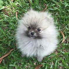 """""""...no, I is NOT a tribble..."""""""