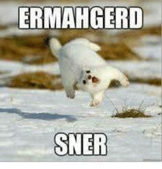 Image result for ermahgerd sner