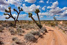 Droga do trójstyku Nevada-Arizona-Utah