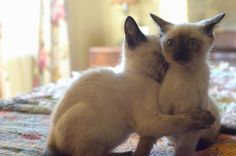 Me as a cat--This Cat Hates Unwanted Hugs As Much As You Do