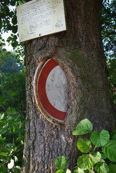 Yummy, tree eats shield