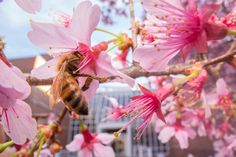 Research from North Carolina State University finds that bees in urban areas stick to a flower-nectar diet, steering clear of processed sugars found in soda and other junk food.
