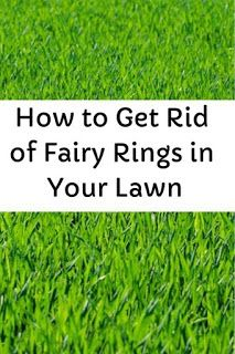 Garden And Yard How To Get Rid Of Fairy Rings In Your Lawn Fairy Ring Lawn Care Tips How To Get Rid