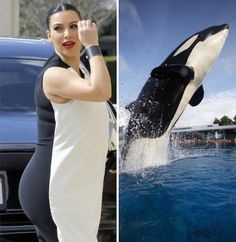 As you might know but don't care, Kim Kardashian is pregnant and recently she wore a dress that replicates a killer whale, also known as Orcinus orca. So comment below and tell us who wore the whale dress better? Kim Kardashian, Kardashian Dresses, I Love To Laugh, Make Me Smile, Haha Funny, Funny Cute, Funny Stuff, Funny Shit, Funny Things