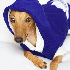 @IggyJoey www.instagram.com/iggyjoey #italiangreyhound