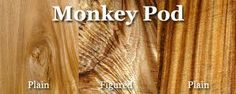 monkey pod tree - Google Search