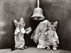 """Cat Wedding: 1914 // 1914. """"Kittens in costume as bride and groom, being married by third kitten in ecclesiastical garb."""" Photo by Harry W. Frees."""