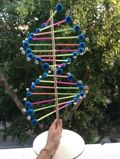 DNA model - made of sticks, straws, and clay.:                                                                                                                                                     More