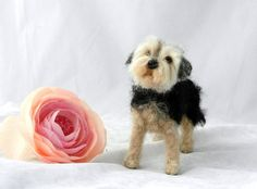 needle felted yorkshire Terrier-Riley | Flickr - Photo Sharing!