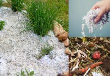 9 Possible Ways to Use Shredded Paper in the Garden