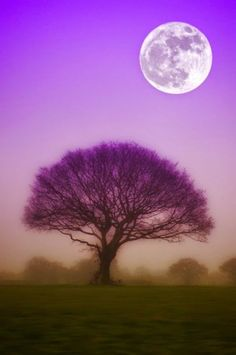 Full Moon Rising above the Mists