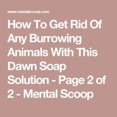 How To Get Rid Of Any Burrowing Animals With This Dawn Soap Solution - Page 2 of 2 - Mental Scoop