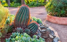 If you have an interest in creating a cactus garden, here is a gallery with 15 beautiful cactus garden ideas that you should explore.