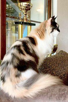Sweet > Beautiful Cats Gif #repin