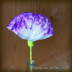 Kytička ke Dni matek - Mother's day flower Diy And Crafts, Crafts For Kids, Birthday Parties, Artist, Creative Things, Flower, Google, Products, Cuba