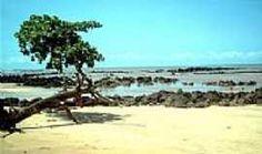 Praia Grande - Praia Grande