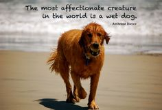A wet dog comes with some bad #PetOdor! Don't forget your #CritterZone for these occasions! #DogQuotes #DogHumor